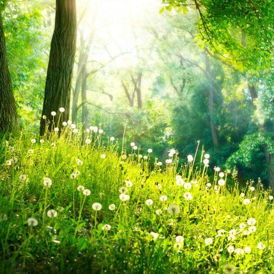 environment-and-social-responsibility