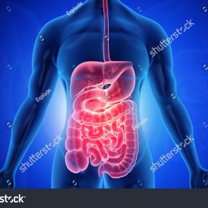 stock-photo-anatomy-of-human-body-with-digestive-system-d-illustration-1452312020